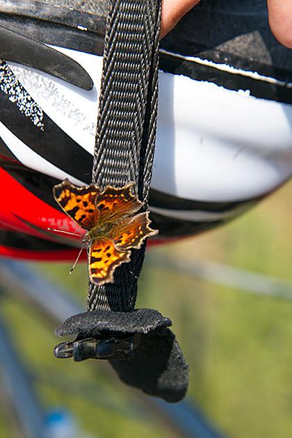 Bike Butterfly