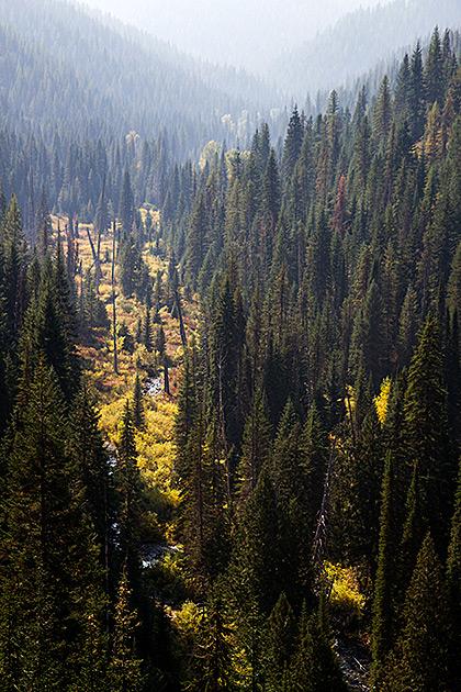 Tree Valley Idaho