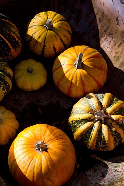 Boise-Pumpkins