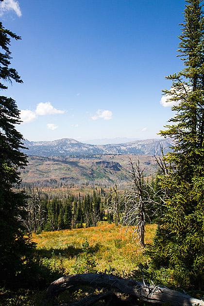 Idaho-Medow
