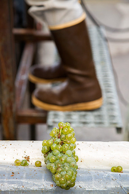 Idaho Wein