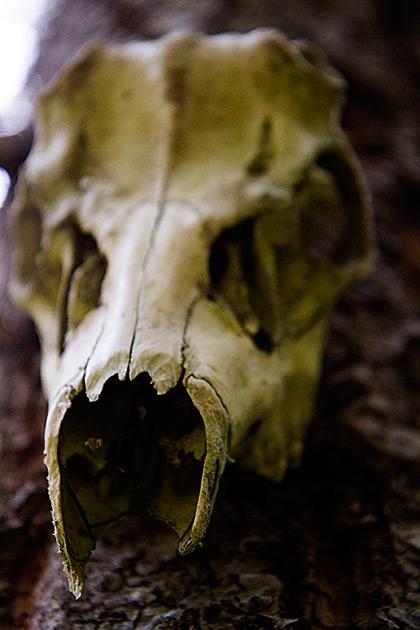 Skull Idaho