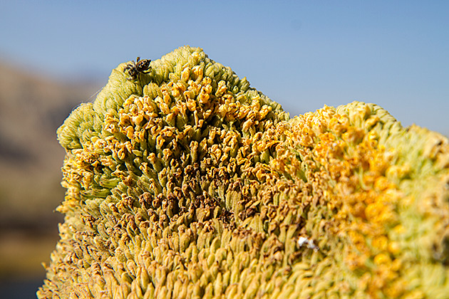 Idaho Spider