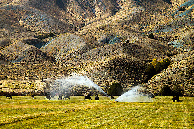 Idaho Sprinkler