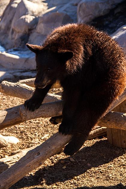 Drunk-Bear