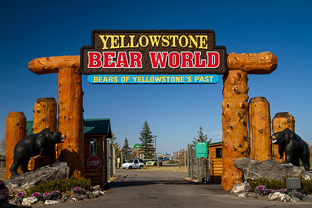 Yellowstone-Bear-World-Idaho